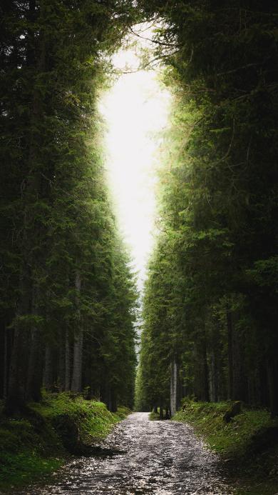 一线天 景色 茂密 森林