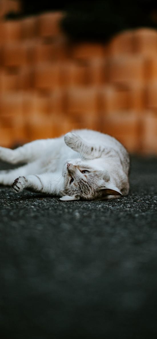 猫咪 宠物