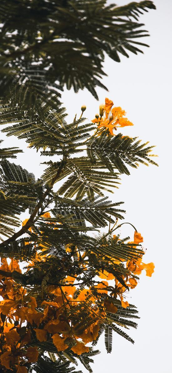 树木 绿叶 鲜花 黄色
