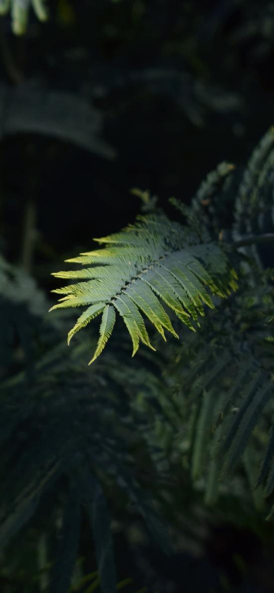 植株 蕨类植物 潮湿 绿化