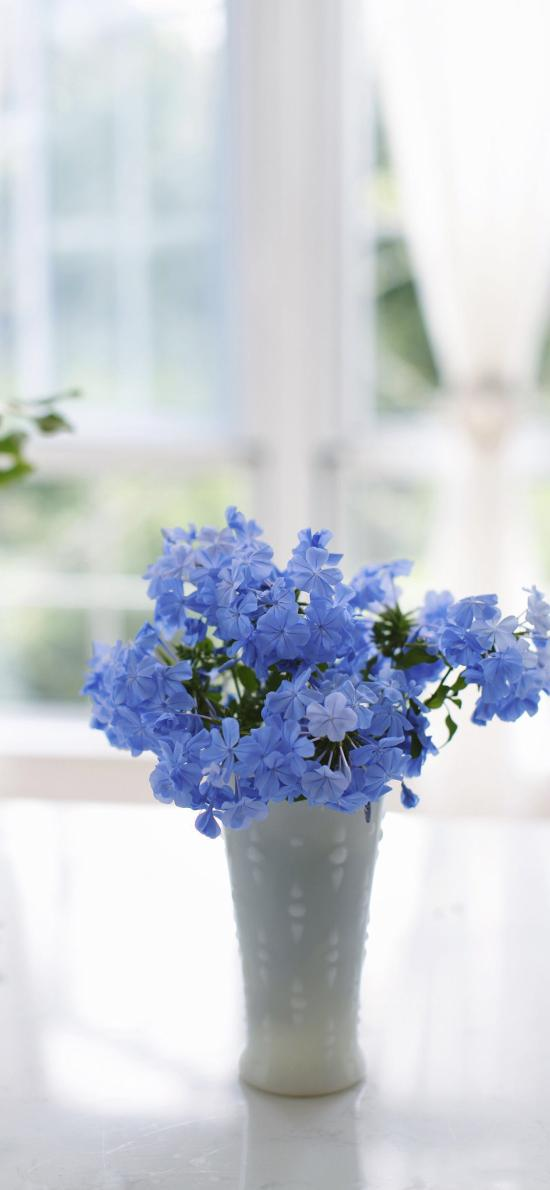 蓝雪花 插花 鲜花 花瓶