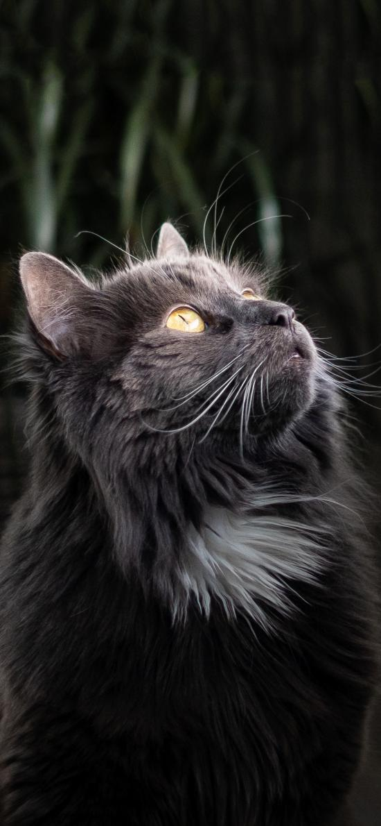 宠物猫 喵星人 灰色
