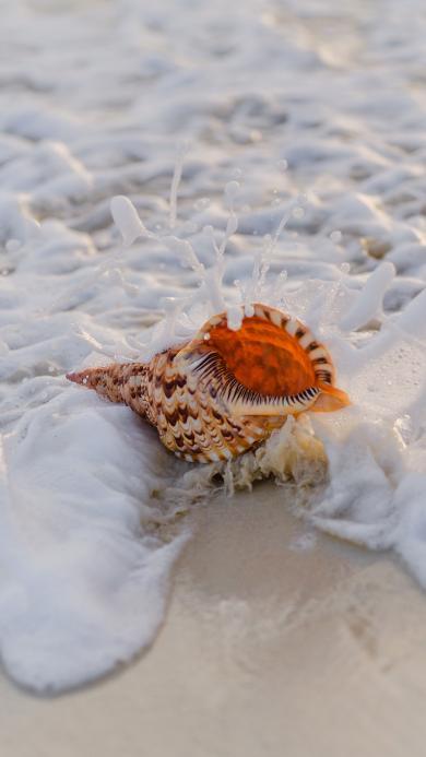 海浪 海螺 冲刷 沙滩