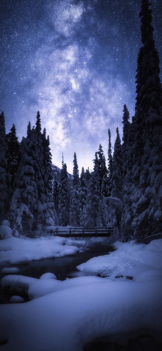 雪季 星空 雪景 树木
