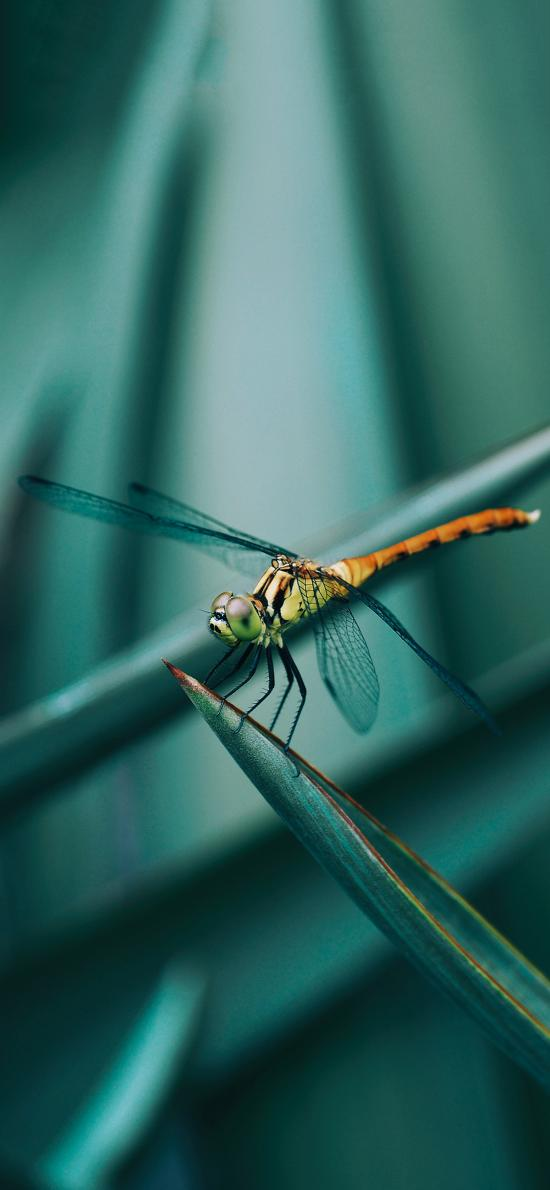 绿植 叶子 昆虫 蜻蜓