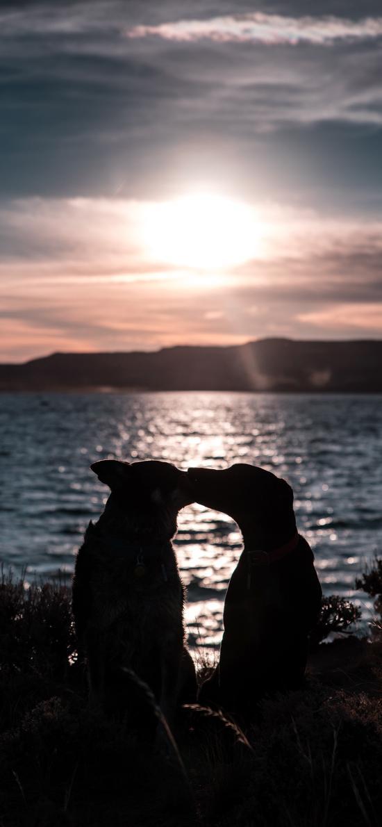 湖泊 宠物狗 接吻 太阳