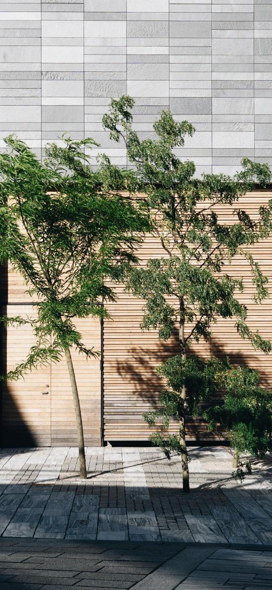 街道 树苗 树影 阳光