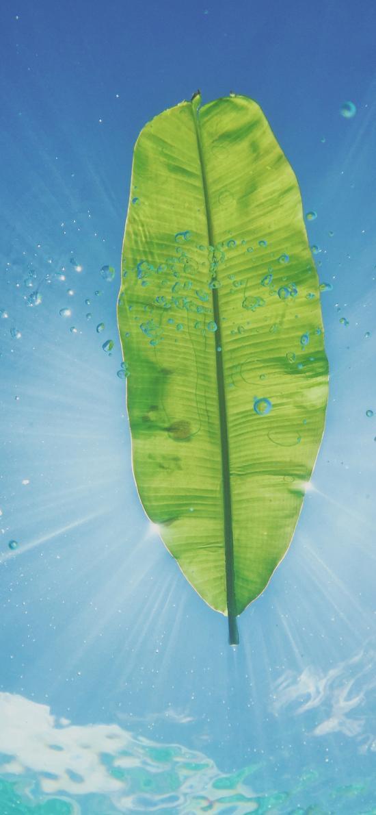 芭蕉叶 天空 气泡 水面 仰拍 运动
