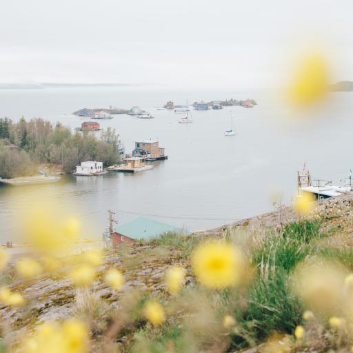 自然 鲜花 河流 船只