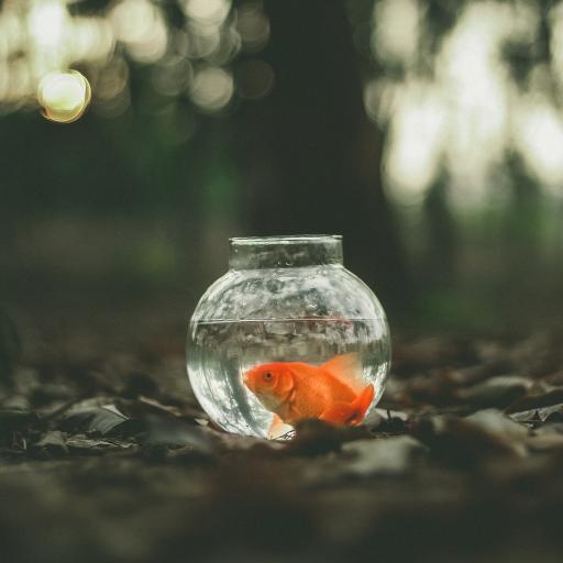 金鱼 宠物 玻璃瓶 水 生物