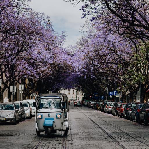 道路 花 车辆 行驶 树木