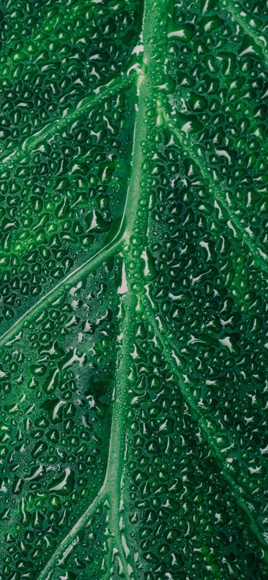 绿叶 水珠 露珠 纹路 绿植