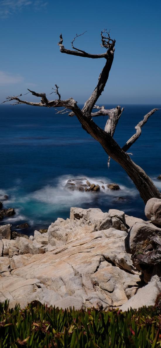自然美景 海洋 岩石 枯木