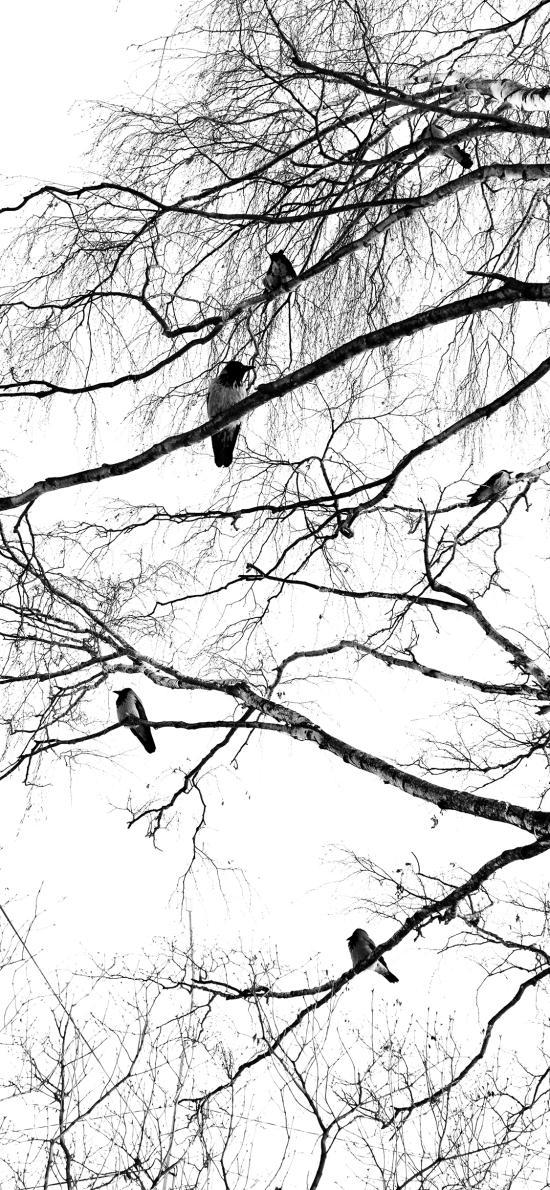 景色 枯树 鸟类 站立 树枝