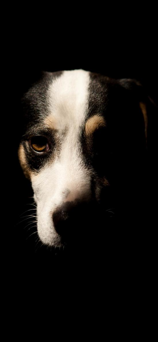 狗 阴影 宠物