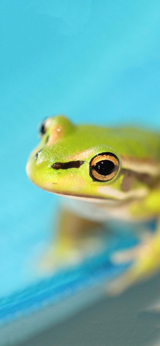 青蛙 益类 蛙类