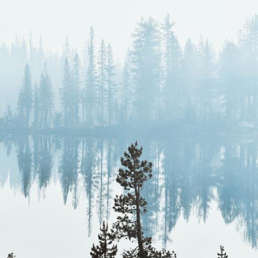 树木 湖泊 倒影 美景