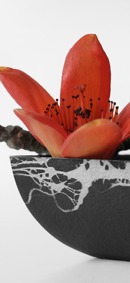 木棉花 鲜花  盛开 瓷器
