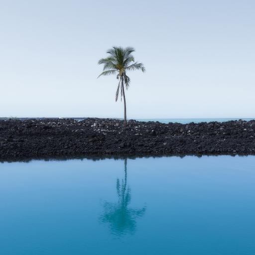 湖泊 椰树 倒影 宁静