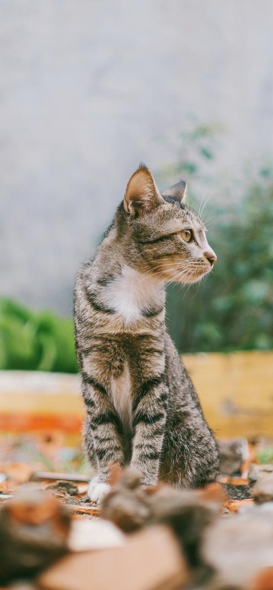 猫咪 宠物 灰猫 站立