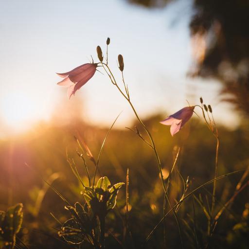 草丛 鲜花 绽放 阳光
