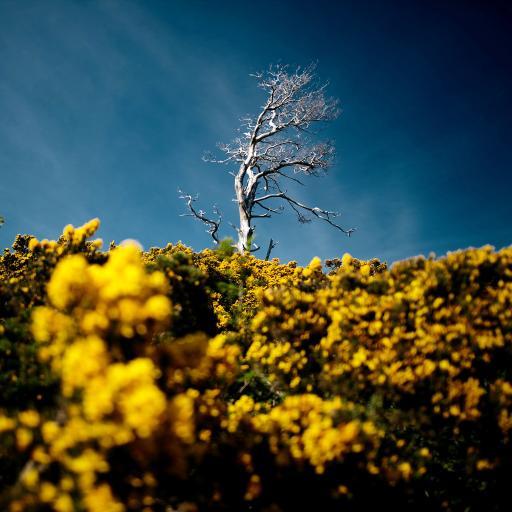 花田 黄色鲜花 枯木 自然