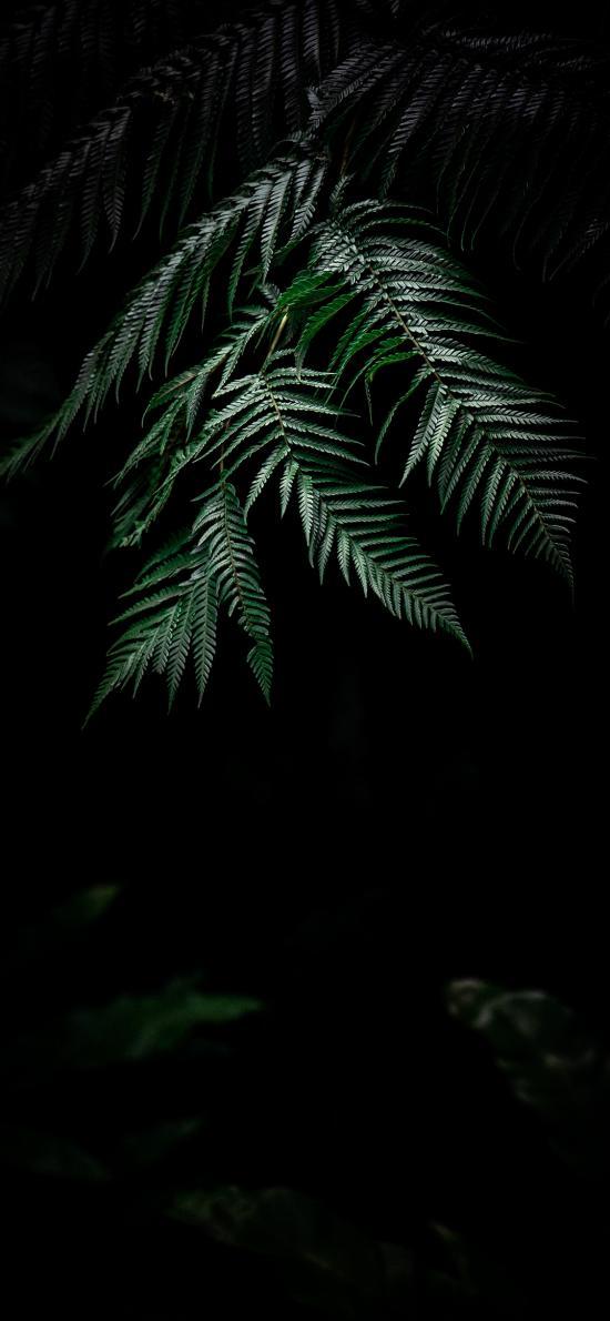阴暗 树叶 绿叶 绿化