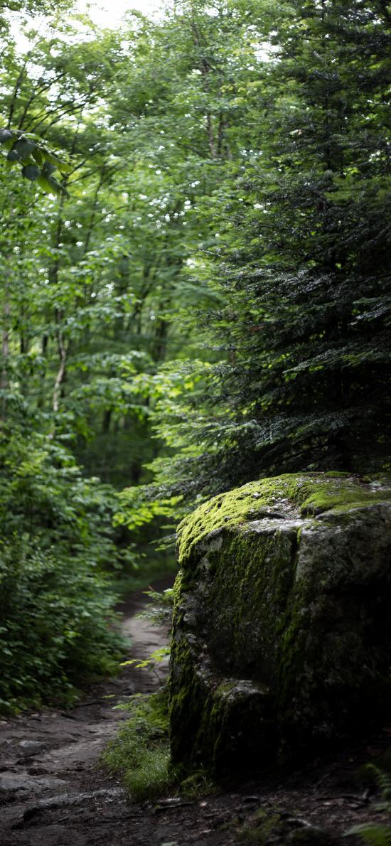 野外 羊肠小道 苔藓 树林 猫咪