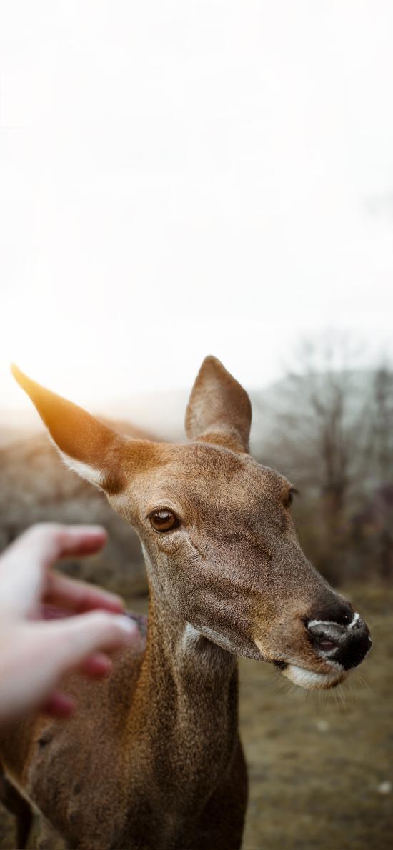 保护动物 小鹿 可爱 触摸