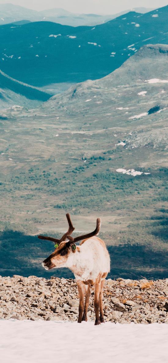 郊外 驯鹿 保护动物 鹿角