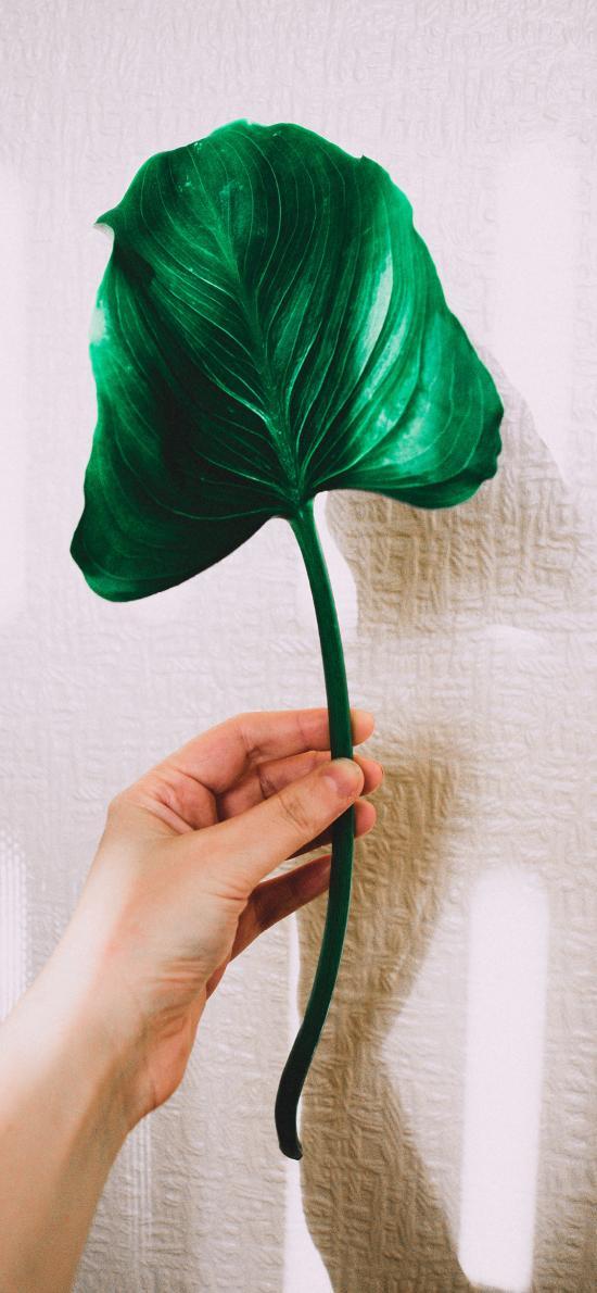 叶子 手部 绿叶 大片