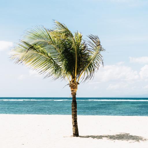 大海 沙滩 树木 屹立
