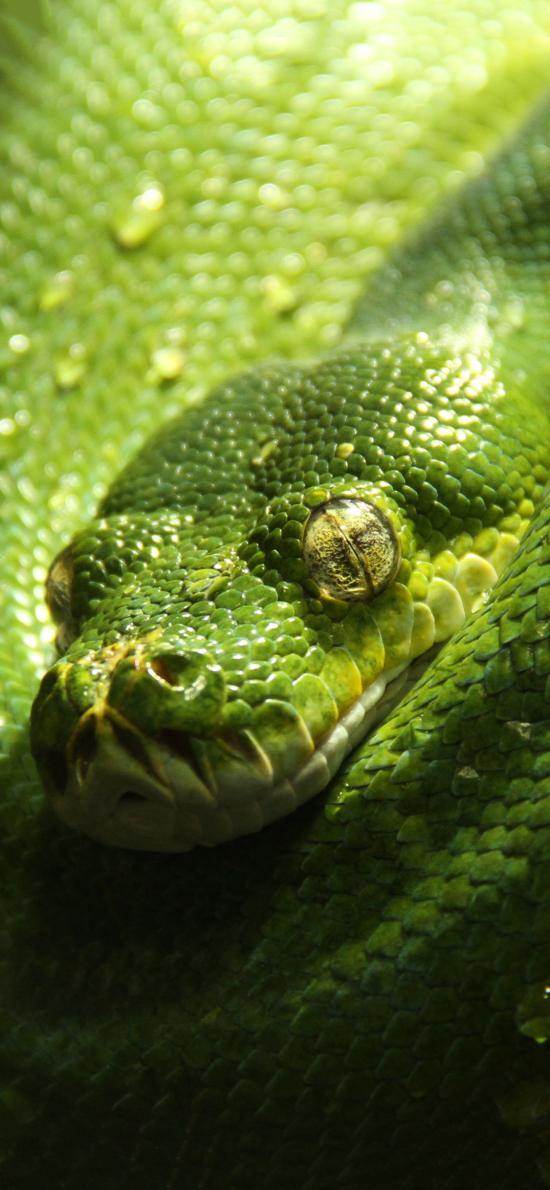 蛇 绿色 卷曲 盘曲 凶猛