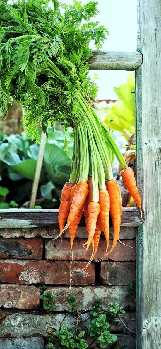 食材 蔬菜 胡萝卜 维生素B