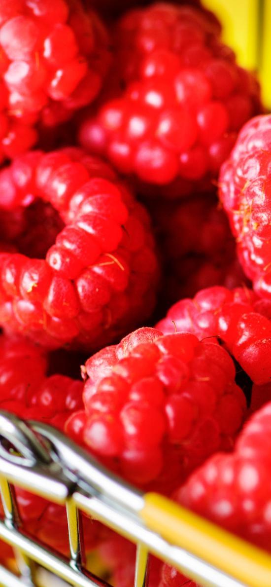 蔓越莓 水果 颗粒 新鲜