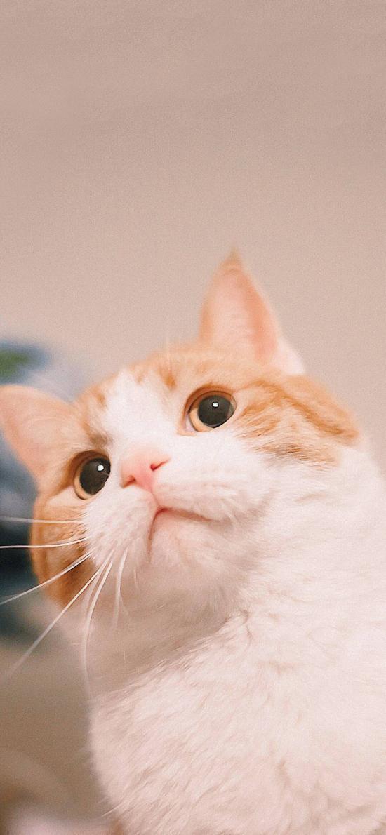 宠物猫 喵星人 可爱