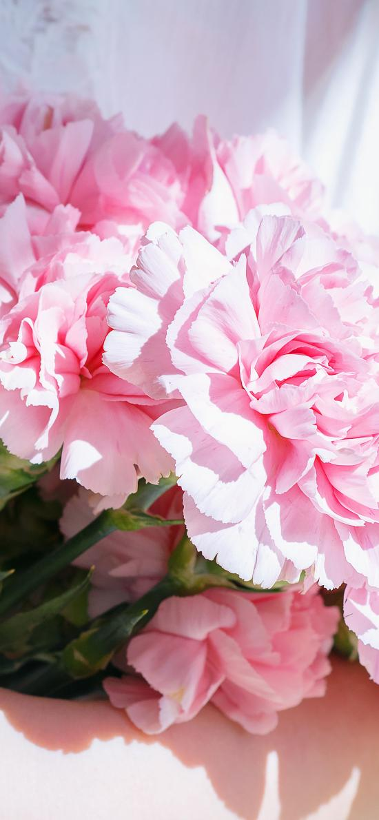 康乃馨 鲜花 粉色 花束