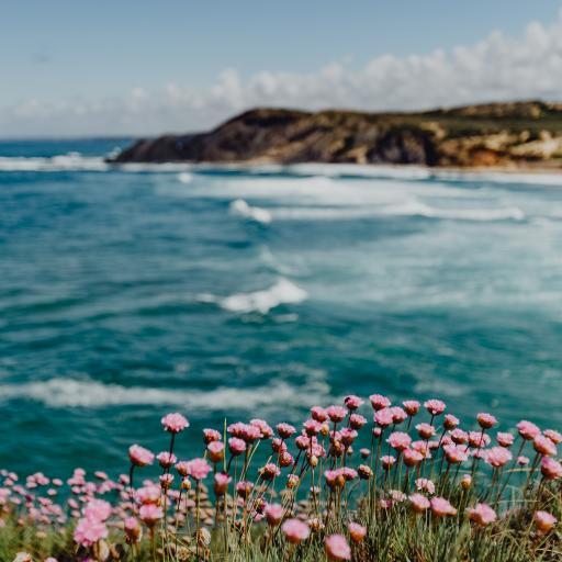 海岛 海岸 小花 海水