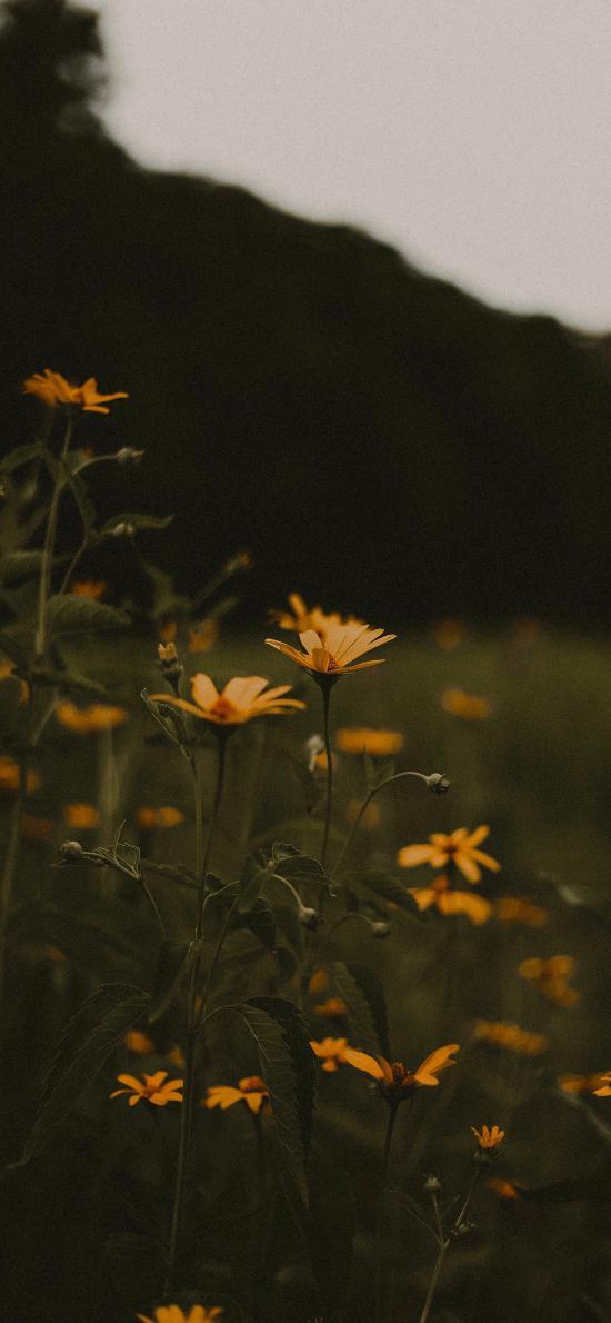 野花 草丛 雏菊 密集
