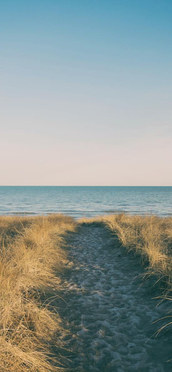 海滩 海岸 大海 杂草 路