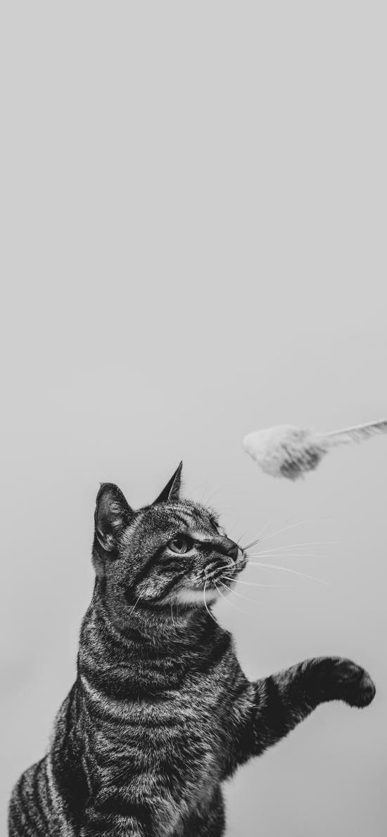 猫咪 喵星人 可爱 黑白