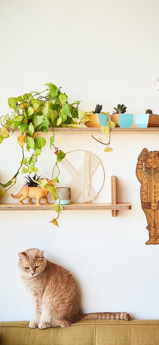 家居 猫咪 家居 装饰 绿植 盆栽