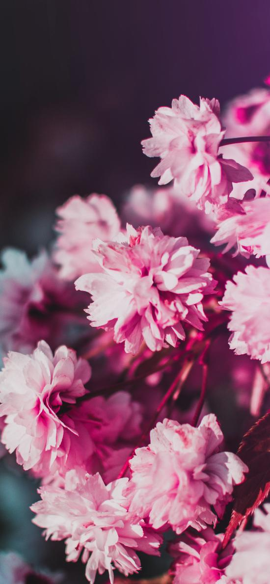 花季 鲜花 盛开 花簇