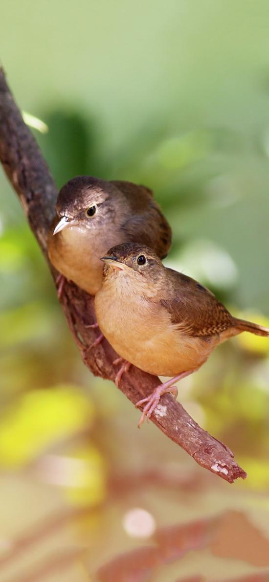 鸟 栖息 枝干 翅膀