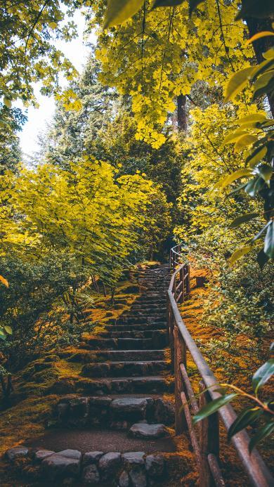 阶梯 爬山 树林 郁郁葱葱