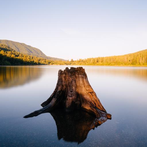 郊外 湖泊 树桩 意境