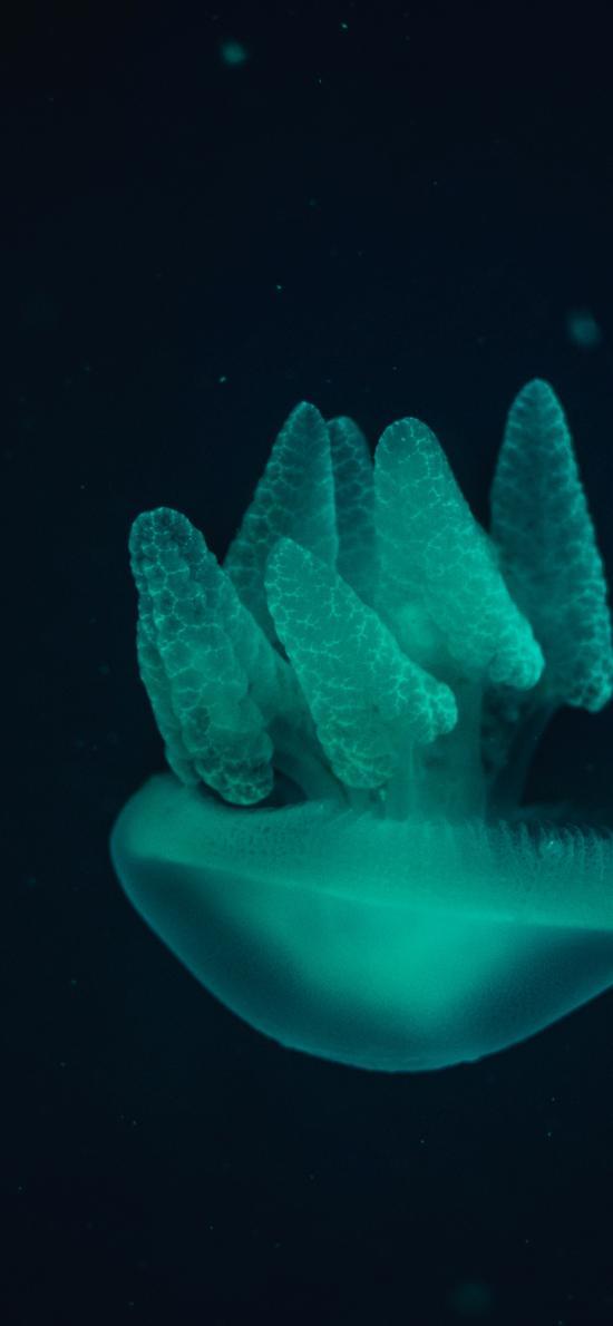 水母 海蜇 深海 海洋生物