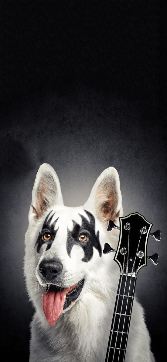 宠物狗 萨摩耶 创意写真 吉他手