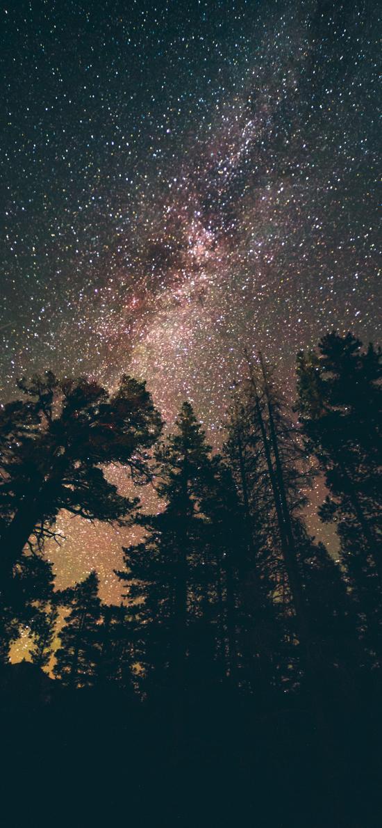树林 仰望 星空 夜晚