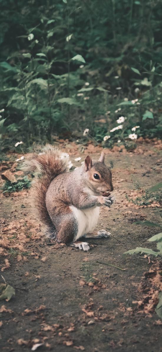 松鼠 户外 觅食 尾巴